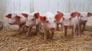 Комбикорм для животноводства со скидкой  (дисконтом) Полоцк КХП
